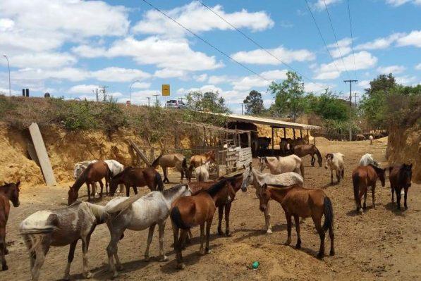 Posturas fiscaliza e apreende animais soltos em vias públicas - Prefeitura  Municipal de Vitória da Conquista - PMVC