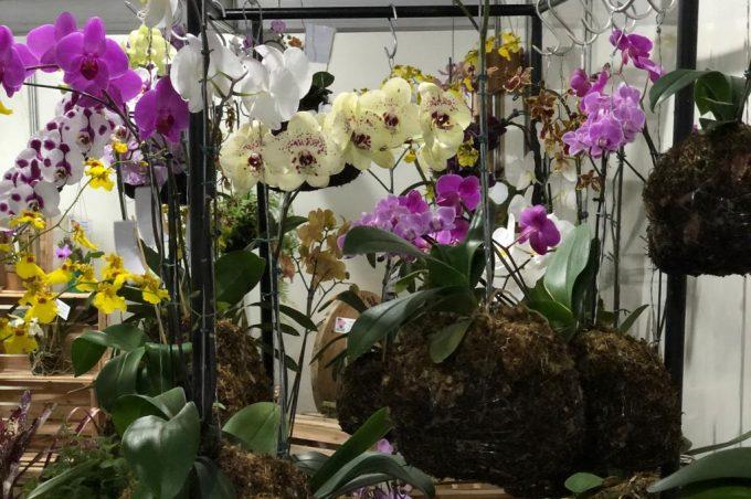 Feira de Orquídeas movimenta Praça do Gil neste fim de semana