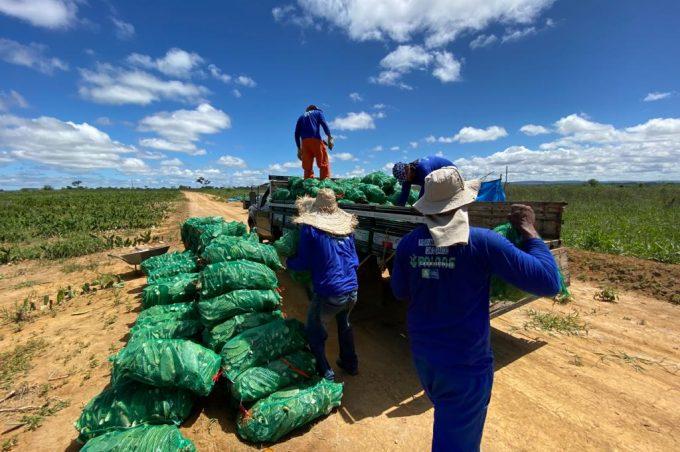 Palmas para Conquista: mais produtores rurais receberam mudas nesta sexta-feira (21)