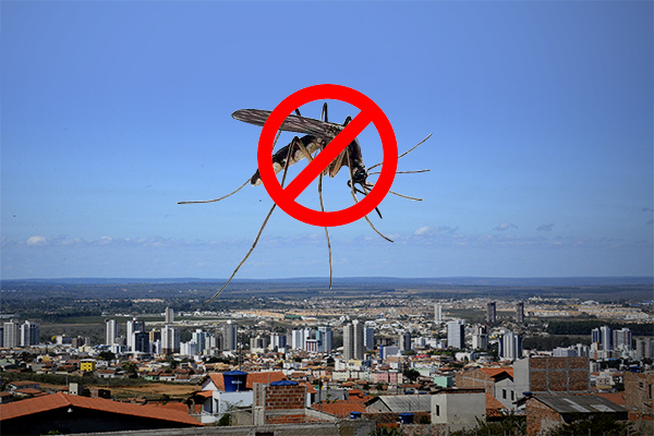 dengue nao